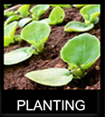 Planting Mobile